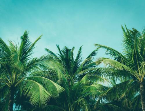 Nachhaltiges Palmöl – der Report